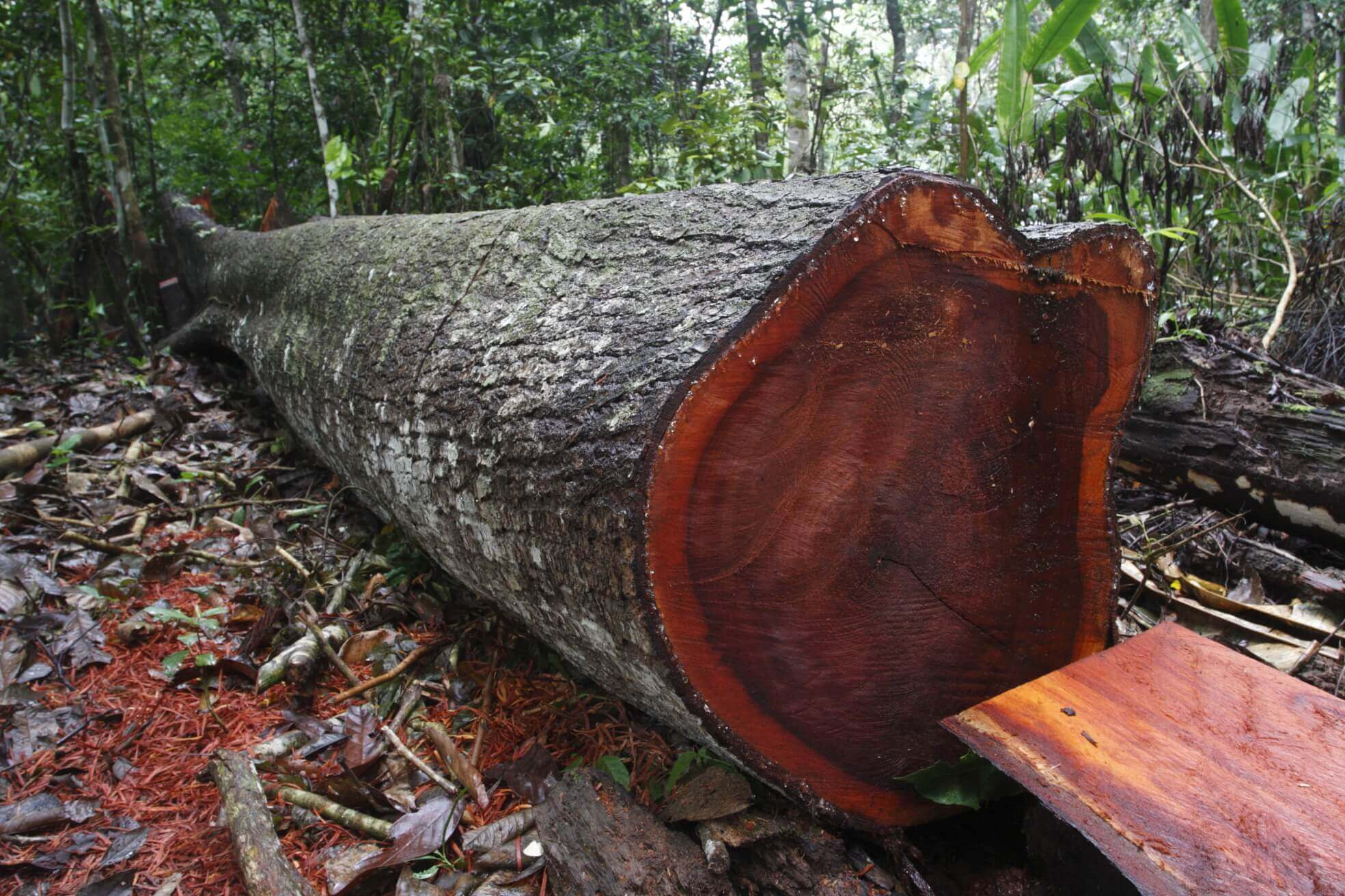 איך לבחור מחסן עצים בראשון לציון?